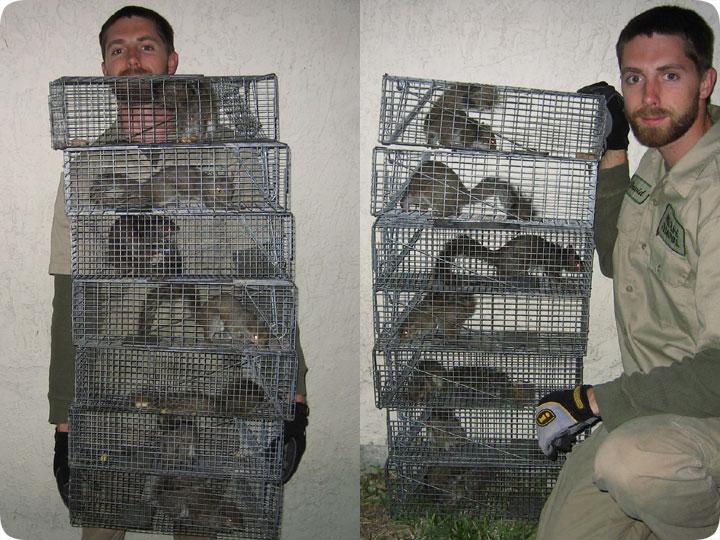 Squirrel Cage Plans