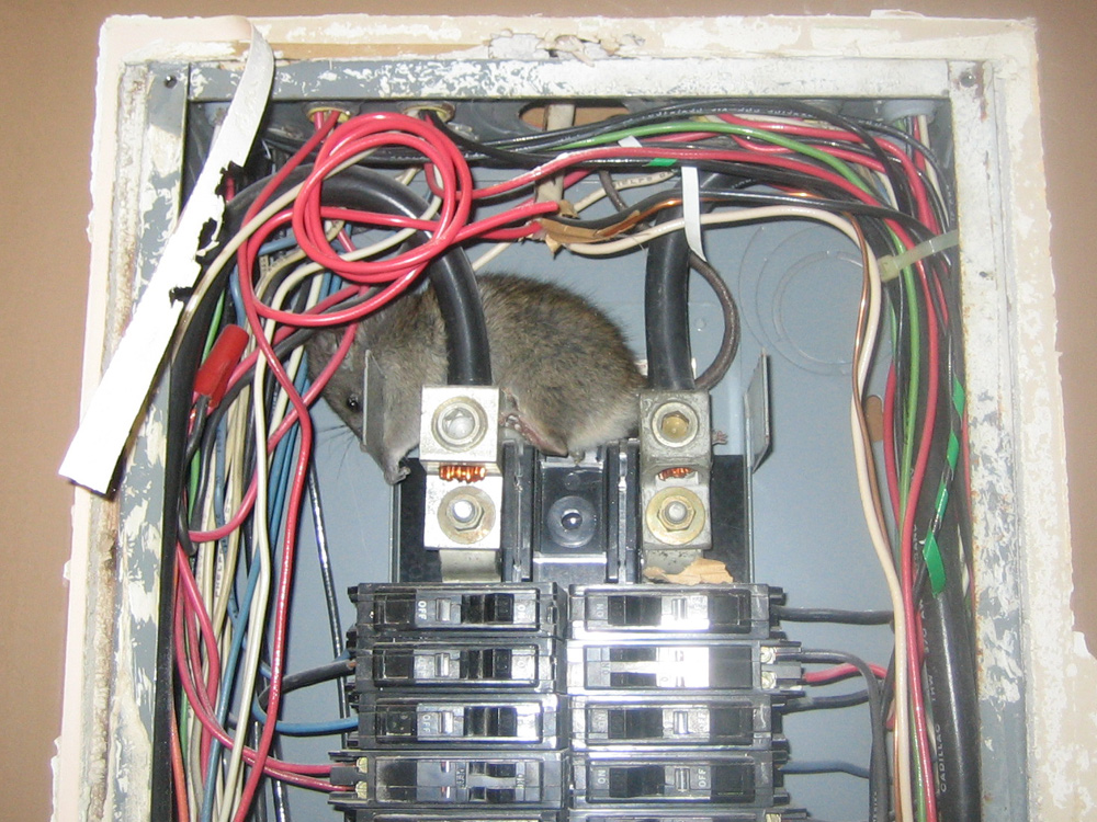 100 Amp Sub Panel Box Wiring Diagram Rat Photograph Gallery Pictures Amp Images