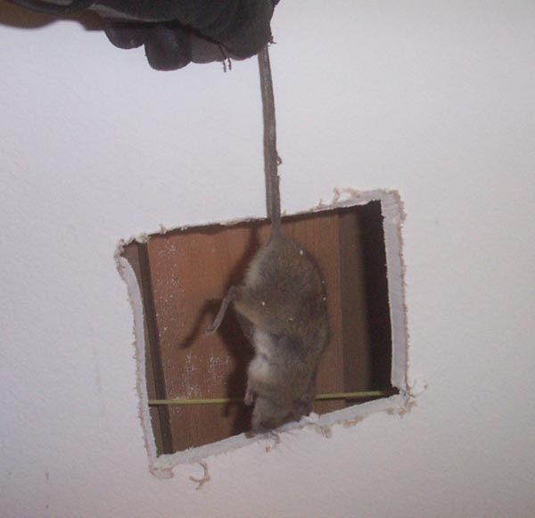how to close holes in walls