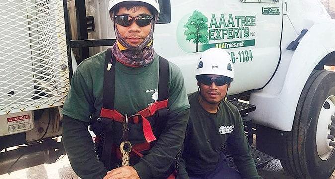 Lin and Chung at AAA Tree Experts