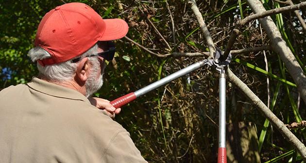 Beware! DIY Tree Care Can be Hazaudous