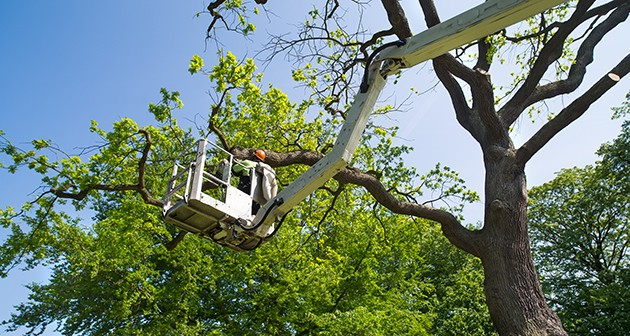 All that you need to know about tree pruning in spring