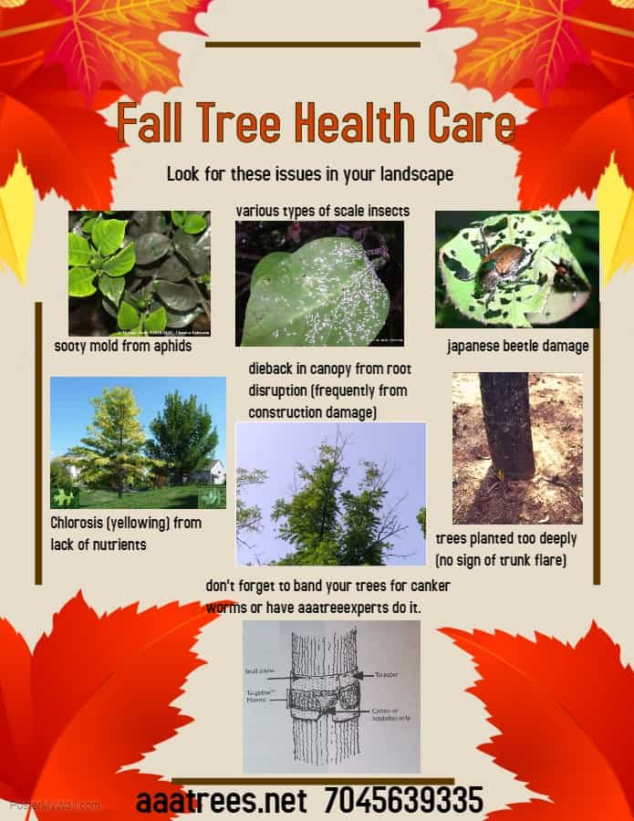 Fall tree healthcare