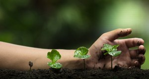 The Benefits of Plant Health Care Services