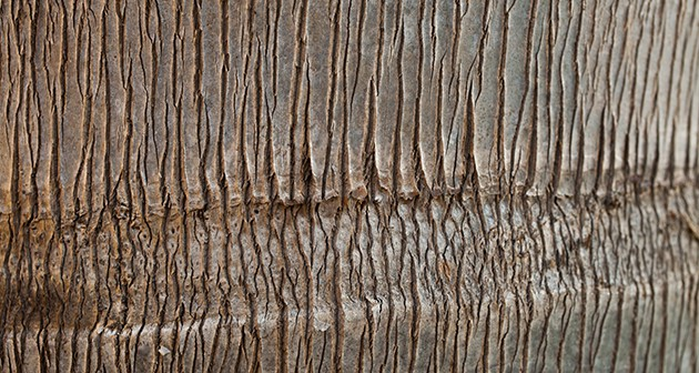 What are Tree Bands and Why are They Necessary?