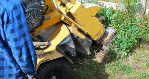 3 Reasons to Remove Stumps in Your Yard
