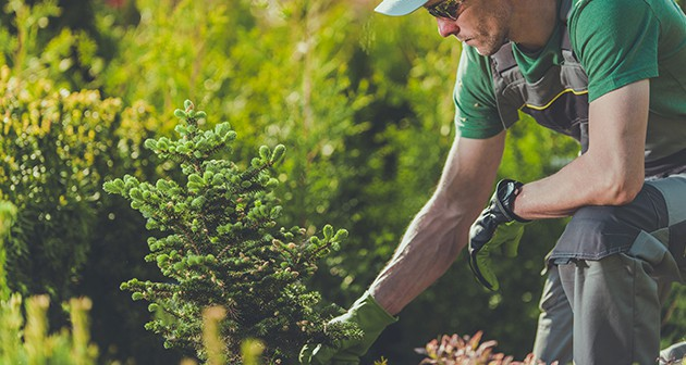 Is Your 'Arborist' Just A Gardener? Don't Risk It!