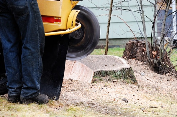 Reasons to Hire Professional Arborists for Stump Grinding?