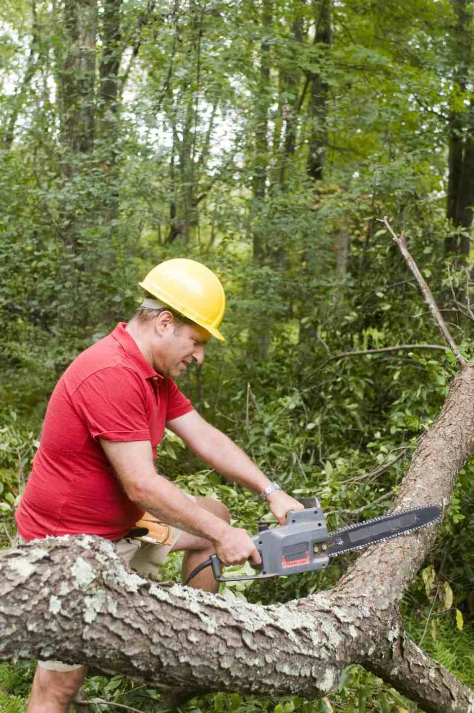 Tree Service & Tree Care Charlotte NC - AAA Tree Experts