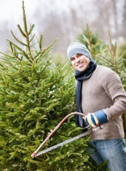 Man with saw choosing fresh Christmas trees at cut your own tree farm