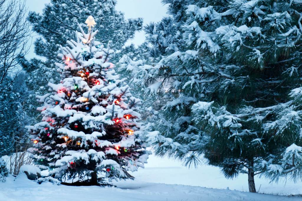 picture of a Christmas tree (or xmas tree) decorated outdoors in the snow