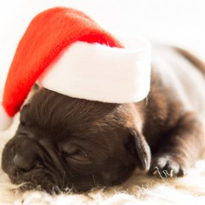 picture of dog with santa hat on