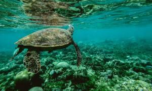 Ministério pretende combater lixo no mar - só não disse quais os prazos e metas. Foto: Belle Co/Pexels