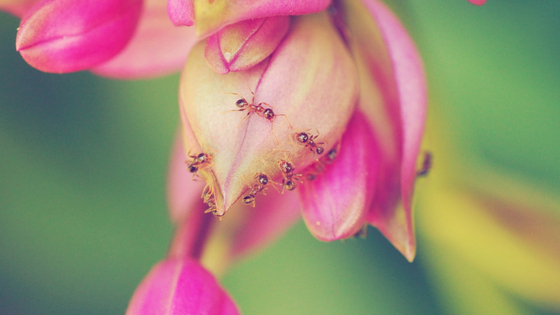 How to Get Rid of Ants the Natural Way