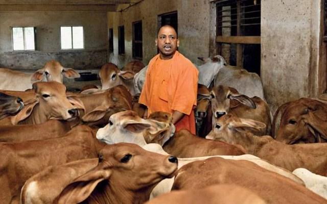 bjp बीजेपी export beef