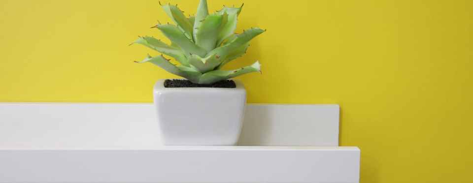 A small green plant on a white shelf