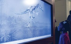 A young black girl watches a dinosaur skeleton on a screen.