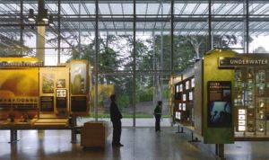 View of the inside of the CA Academy of Sciences two people stand reading text panels on exhibit walls in the center of a glass enclosed gallery.