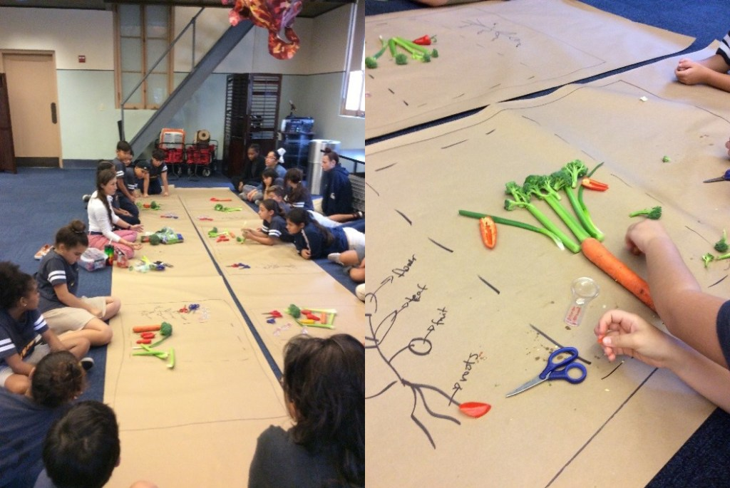 Students are seen dissecting broccoli and carrots on rolls of brown paper, next to drawn diagrams of their structures.