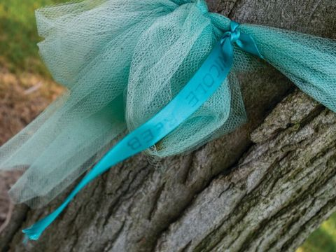 A teal ribbon wrapped around a tree trunk.