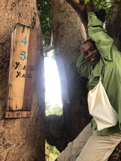 "A staff member posing in a tree with a wooden box reading ""Ylang Ylang"""