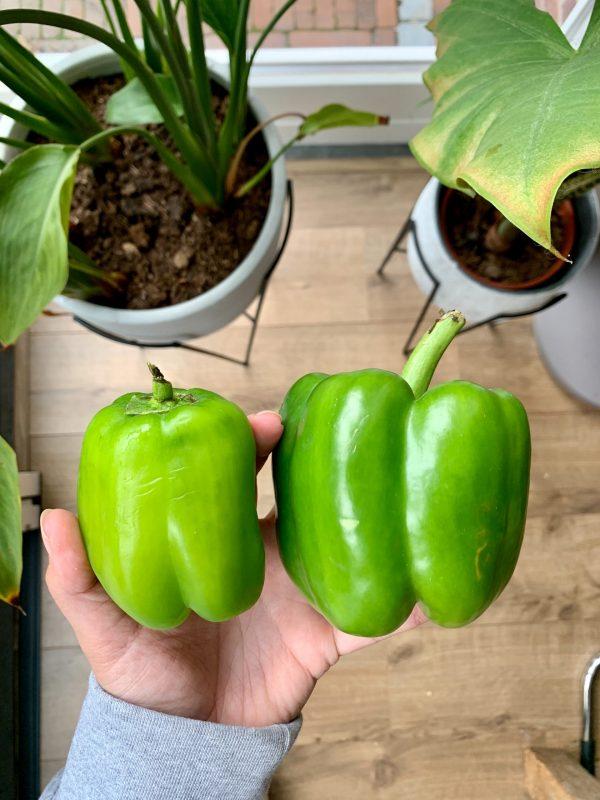Turkse groene paprika's