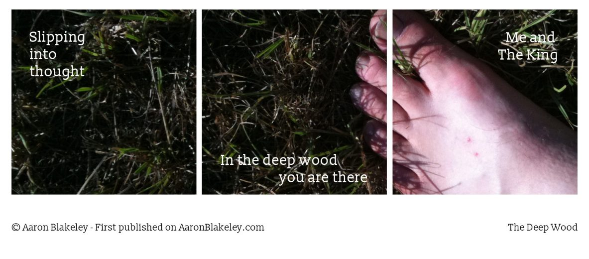 The Deep Wood - Haiku - Aaron Blakeley - The Daily Haiku Web Comic