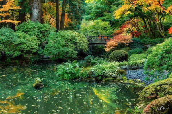 Zenetics Portland Oregon - Japanese Garden Aaron Reed