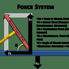 Force Vector Diagram Calculations Goodman Heat Pump Thermostat Wiring Basic Biomechanics Moment Arm And Torque