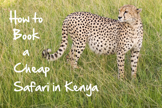 How to Book a Budget Safari in Kenya