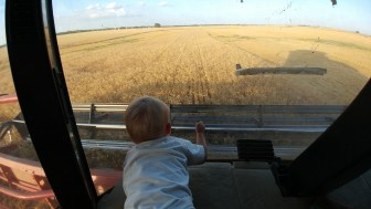 Callan watching the wheat