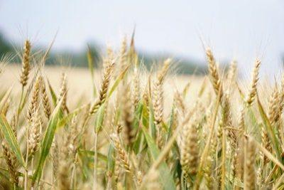 diplomado-distancia-en-agricultura
