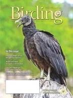Birding Online: June 2015