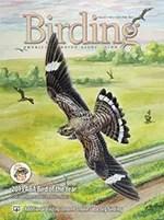 Birding Online: January 2013