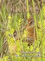 Birding Online: September 2013