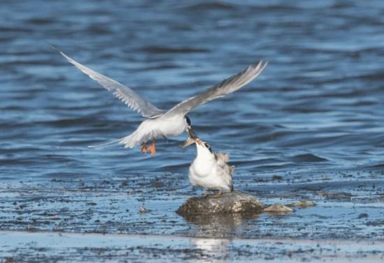 Birding Online: February 2018