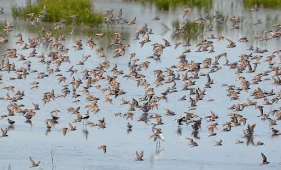 Birding Online: October 2017
