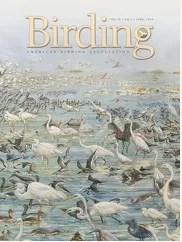 Birding Online: April 2018
