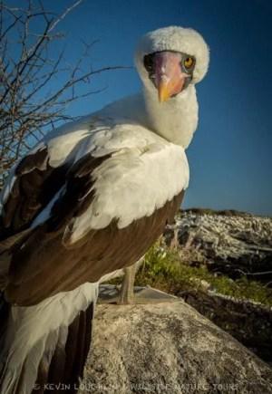 ABA/Wildside Galapagos Adventure