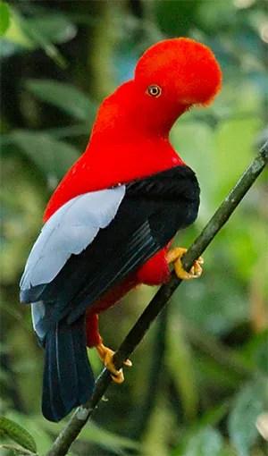 ABA/Rockjumper Colombia Safari