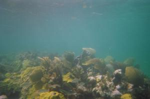 Reef at Casuarina Point (4)