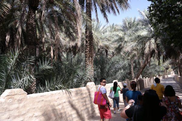 Walking Al Ain Oasis
