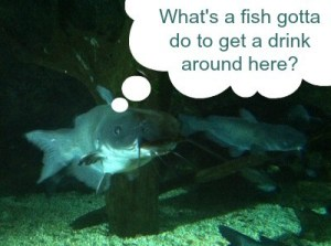fish drink