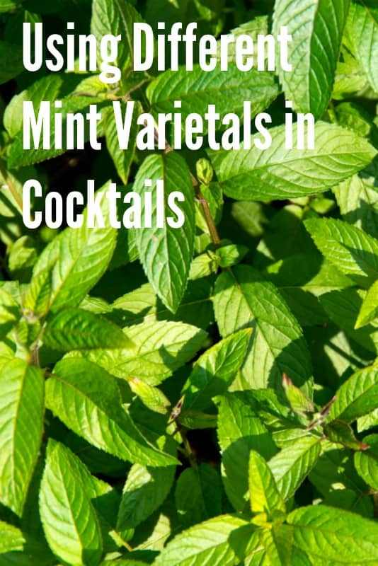 The Perfect Mint: Choosing the Right Varietal for your Bar
