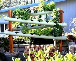 Giardino verticale idroponico
