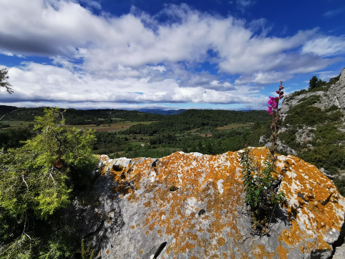 paysage-garrigue-occitanie-fontcaude