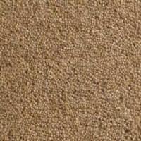 Buxton Wool Twist Carpet | Light Brown | Abbey Carpets