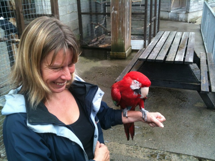 Parrots are popular companion animals and sadly often exhibit behaviour problems.