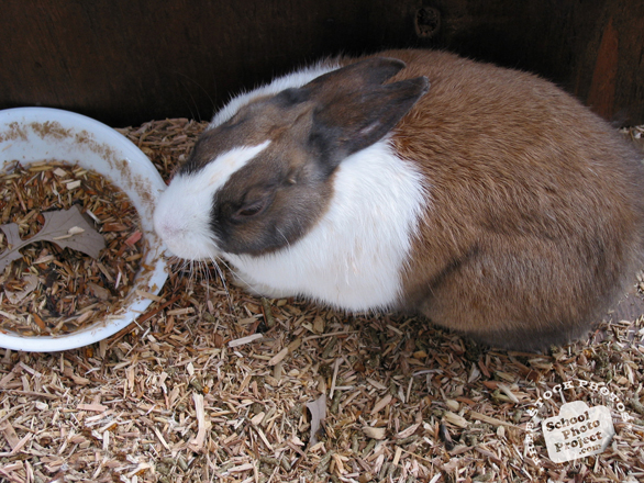 Companion Animal Behaviour problems can occur with rabbits