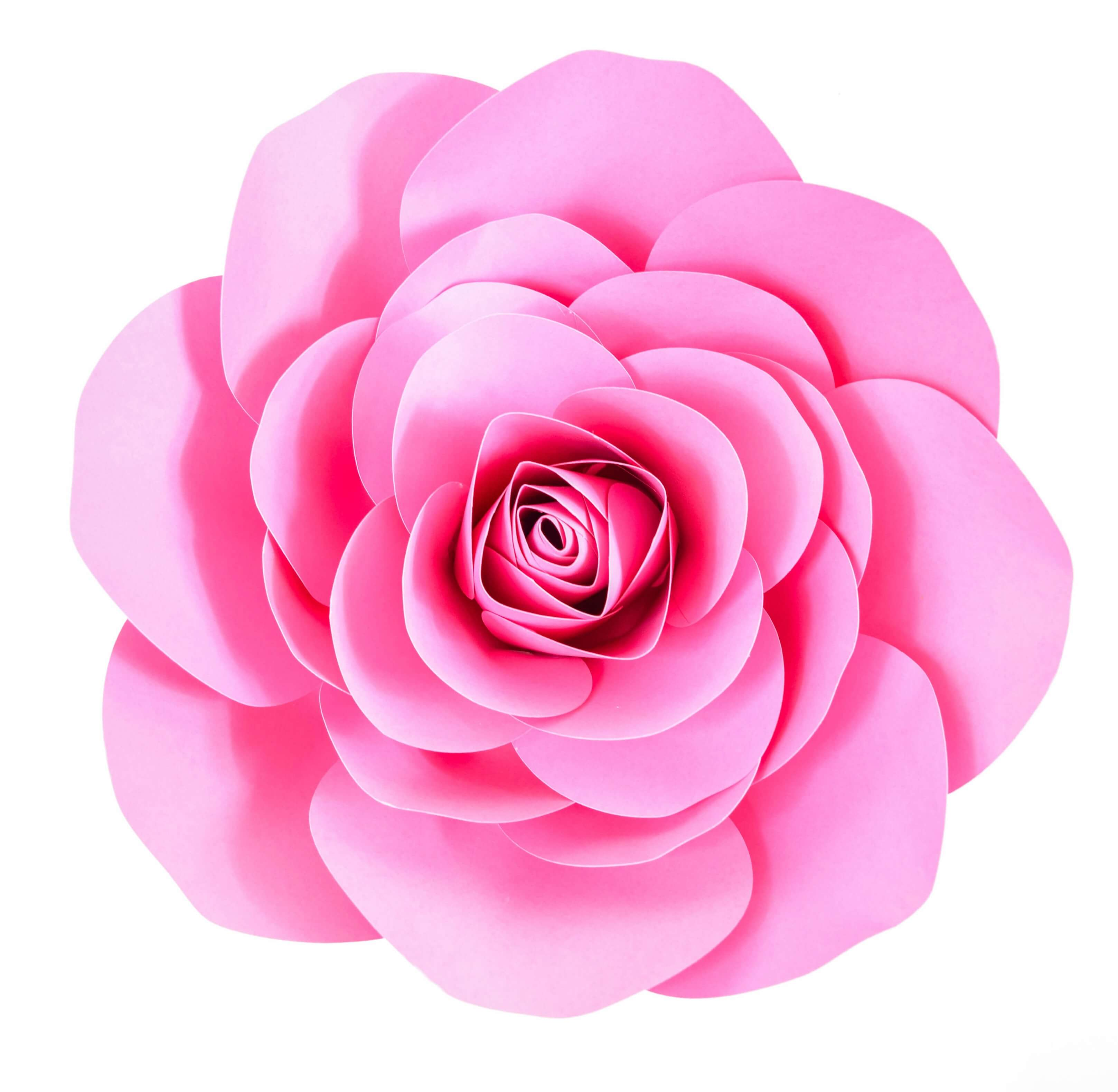 picture about Roses Templates Printable titled Free of charge Massive Paper Rose Template: Do-it-yourself Camellia Rose Guide